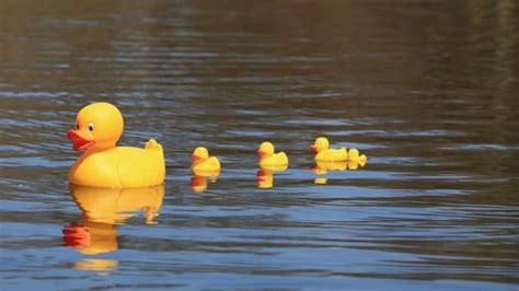 Rubber-ducky race comes home to roost for Nova Scotia