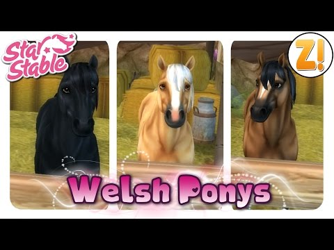 Welsh Pony and Cob Profile and Characteristics